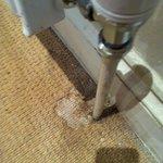 state of carpet