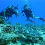diving en cozumel
