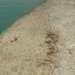 Nobody took care of clearness of beach and Restaurant