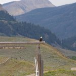 bald eagle at the gate of the ranch!