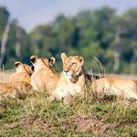 Relaxing in the Masai Mara