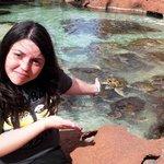 laguna de tortugas marinas