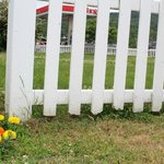 fence with flowers  outside beauty