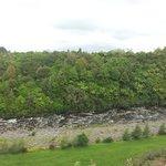 River and bush views