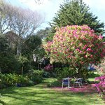 tree sized rhododendron on the lower lawn