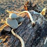 Kelp and Driftwood Scupltures
