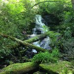 Abe's Creek - a hiking trail on-site