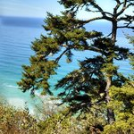 Cypress Trees Among Redwoods