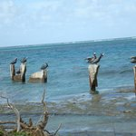 Many shore birds at Hotel on the Cay