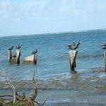 Many shore birds at Hotel on the Cay