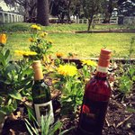 Spring new wine releases!
