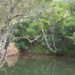 River from Verandah