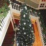 Christmas tree December 2013