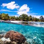 Sea Sanctuaries Trust