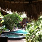 that tropical oasis