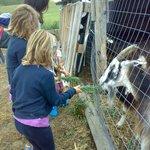 Dalle capre ai caprini