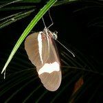 Una mariposa cerca de la picina