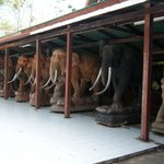 Stables for carved elephants