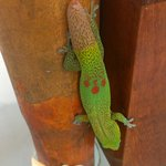Very sweet and friendly, the geckos.