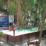 Lankayan - dove si aspetta la schiusa delle uova di tartaruga