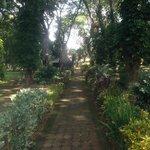 Across the gardens