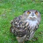 A beautiful owl just before feeding