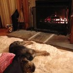 George relaxing in front of the fire :-)