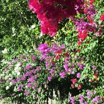 Lovely flowers in parking area