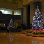 Xmas trees in lobby