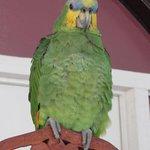 The house pet, a parrot!