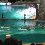Dolphin Show #new version#