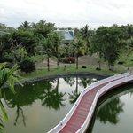 Вид с балкона на пруд с сомами
