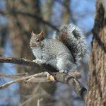 Les écureuils pas farouche du tout
