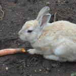 bunnies!!