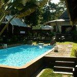 La piscine et les bungalows