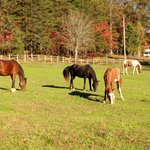 Fall Colors at Horse Creek Stable