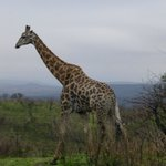 View on the Game Drive