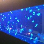 аквариум-стена в ресторане 954