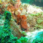 Great Sea Horse we found on our dive