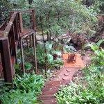 Photo de Serenity Forest Eco Reserve