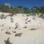 Island of the Iguanas