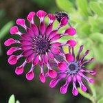 Prachtig onderhouden kleurrijke tuin