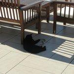 El gato jugando con la culebra muerta debajo de uno de los sillones