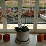 Lobby Plant