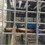 Macca's Birds