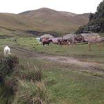 los caballos de paramo listos para salir a la primera ruta