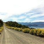 lupinos amarillos a orillas del lago General Carrera
