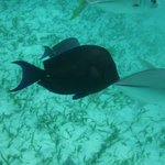 Cool fish from snorkel trip