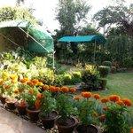 Part of the serene garden...