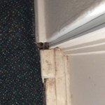 Bild från Parkway Motel
